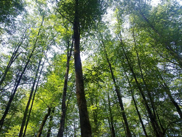 جنگل نمکآبرود